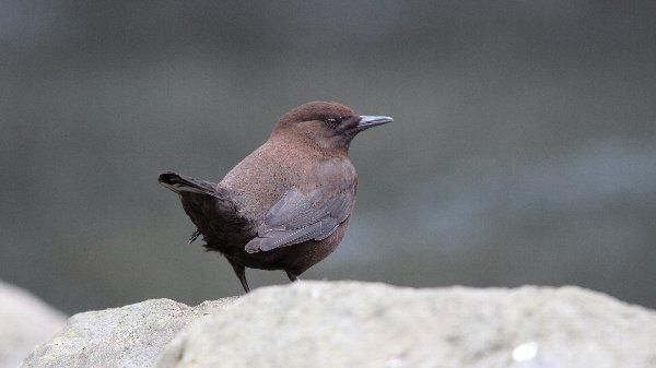水辺の鳥 - 松原・下筌ダムの鳥...